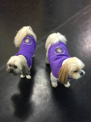 Friendly Dog Club gallery image