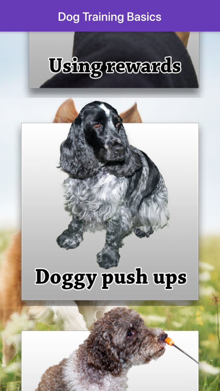 Dog app screenshot