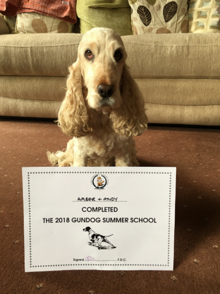 Dog with certificate